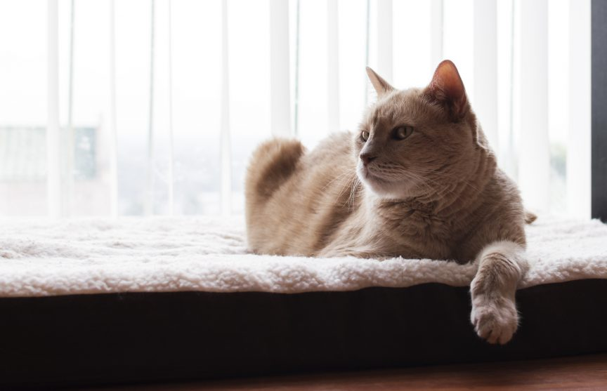 Houescat laying down